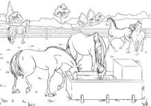 Cartoon Style Scene With Horse...