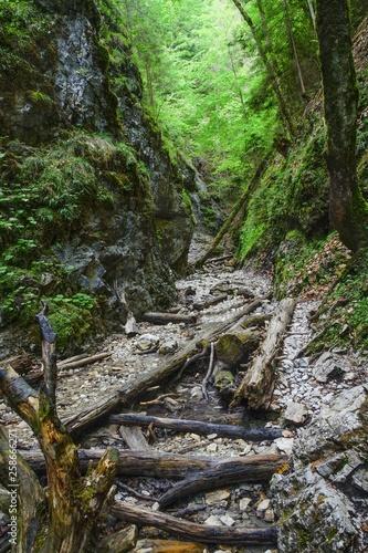 Spoed Fotobehang Onweer Canyon of creek Sucha Biela. Slovak Paradise. Slovakia. Europe.