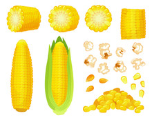 Cartoon Corn. Golden Maize Harvest, Popcorn Corny Grains And Sweet Corn. Ear Of Corn, Delicious Vegetables Vector Illustration Set