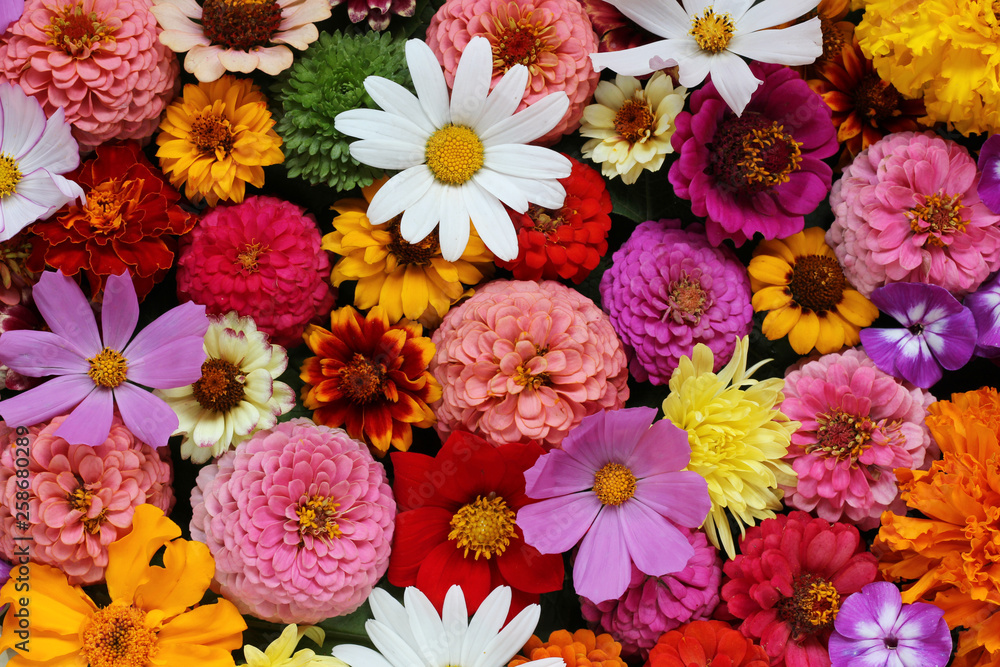 Fototapety, obrazy: floral background, top view. garden flowers.