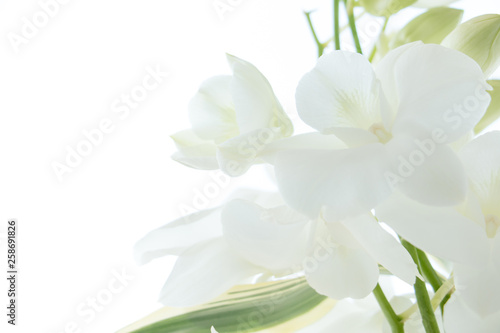 Photo  White orchid on white background