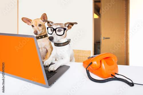 Spoed Foto op Canvas Crazy dog boss management dogs in office