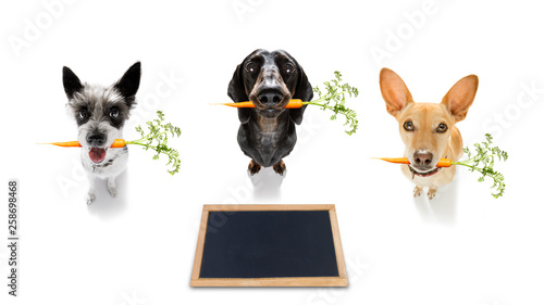 Foto op Plexiglas Crazy dog couple team of dogs with healthy vegan carrot in mouth