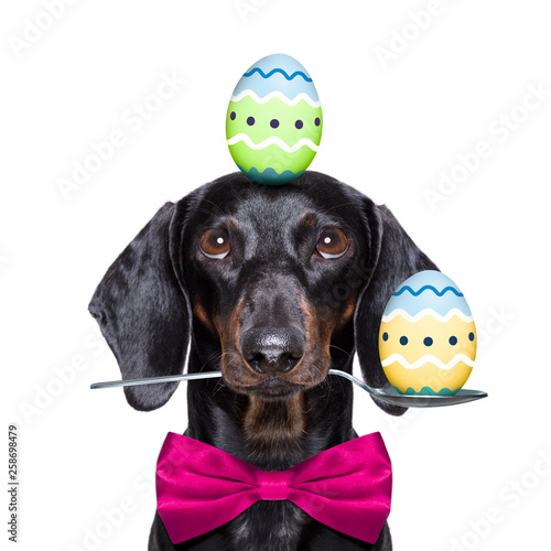 Spoed Foto op Canvas Crazy dog happy easter dog with eggs
