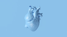 Pale Blue Anatomical Heart 3d ...