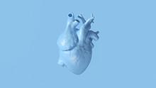 Pale Blue Anatomical Heart 3d Illustration 3d Render
