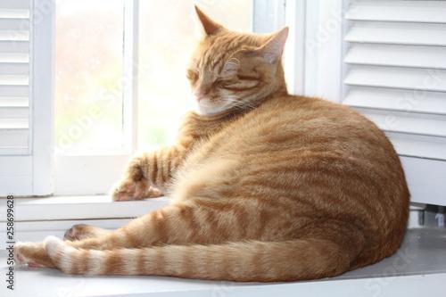 Cat Smile in window