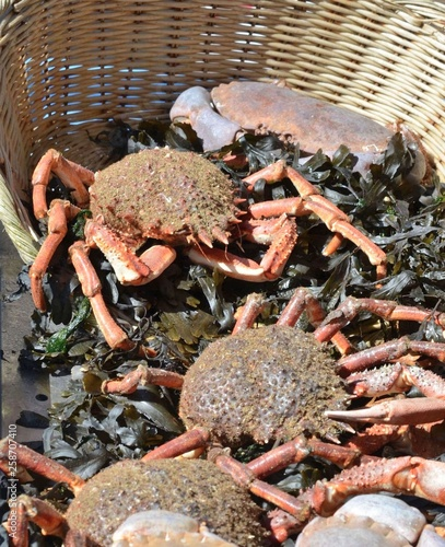 Crabs and Sea spider crab for sale at a french market - Buy this