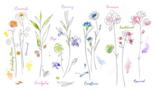 Wildflowers Hand Drawn Waterco...
