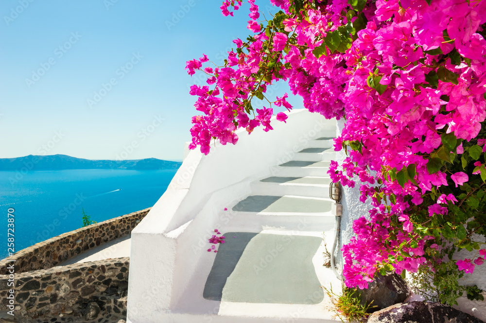 Fototapeta White architecture and pink flowers with sea view. Santorini island, Greece.