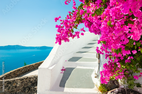 Fototapeta White architecture and pink flowers with sea view. Santorini island, Greece. obraz