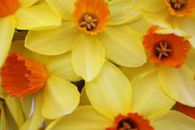 Close Up Of Yellow And Orange ...