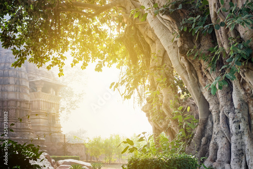 Banyan tree or Ficus benghalensis with Indian temples of Khajuraho in background Canvas Print