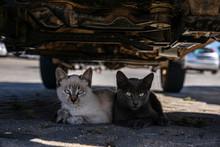 Zwei Kätzchen Unter Einem Auto