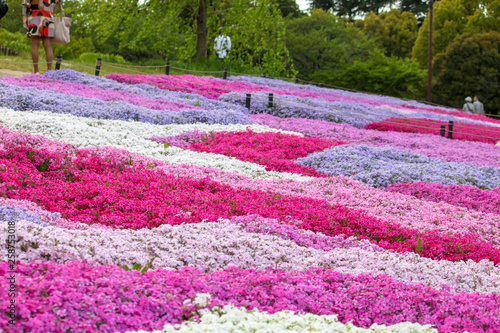 Carpet of colorful flowers beautifying the park in spring