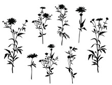 Set Of Silhouettes Of Flowers Chamomile, Daisy, Wild Flowers, Vector, Black  Color, Isolated On White Background