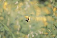 Bee , Queen Bee , Flower , Yellow Flower , Nature