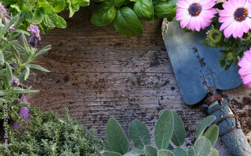 Fotografia, Obraz  Piante aromatiche su uno sfondo legno