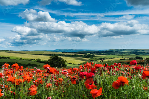 Ingelijste posters Poppy Field of Poppies with Blue Sky