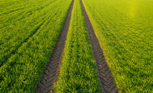 Field In Spring With Tractor T...