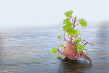 Small Sweet Potato Sprouting F...