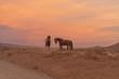 Wild Horses at sunset in the Utah Desert