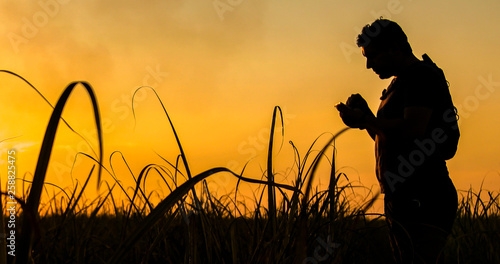 Fototapeta Silhouette of an agronomist concept of agricultural business sugar cane plantation obraz