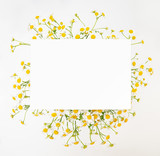 Chamomile daisy floral background
