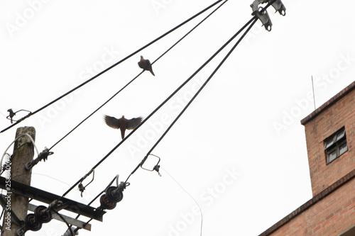 Ave en cable de luz Canvas Print