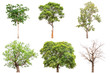 Collection of isolated tree on white background