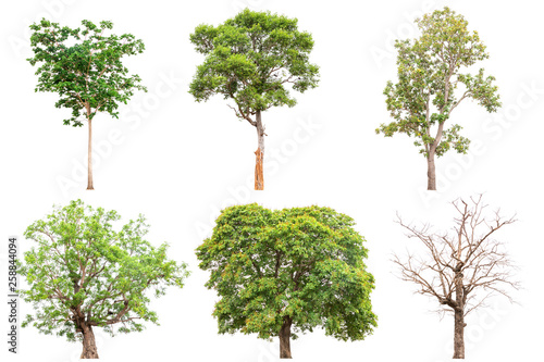 Foto  Collection of isolated tree on white background