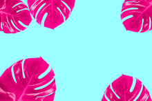 Pink Monstera Leaves Background