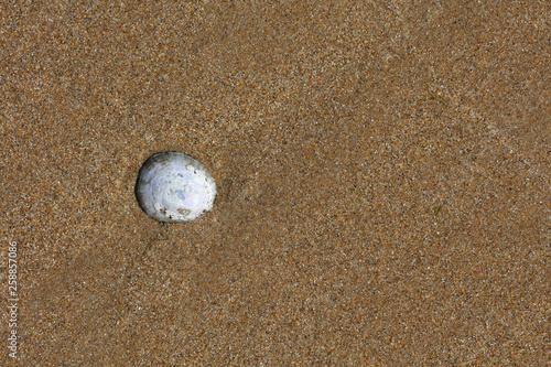 Photo sur Plexiglas Zen pierres a sable Sand Strand mit Muscheln