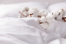 Branch With Cotton Flowers On Bed