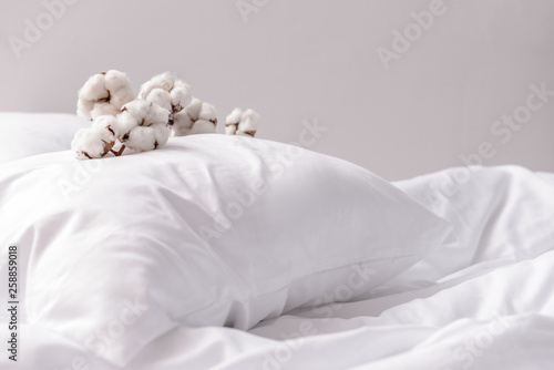 Fotografia Branch with cotton flowers on pillow