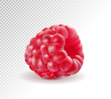 Ripe Raspberries Isolated On Transparent Background. Quality Realistic Vector. 3d Illustraton