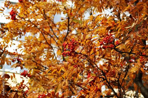 Deurstickers Berkbosje Colors of autumn