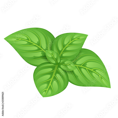 Fotografía Green basil leaves vector illustration.