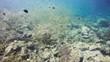 Viele Fische im Indischen Ozean - Unterwasserleben