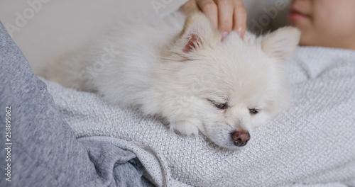 In de dag Ijsbeer Sleep white pomeranian with pet owner cuddle
