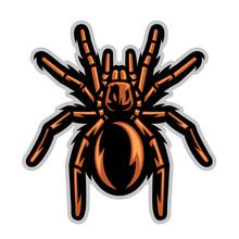 Tarantula Spider Mascot