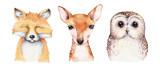 Fototapeta Fototapety na ścianę do pokoju dziecięcego - Watercolor set of forest cartoon isolated cute baby fox, deer, raccoon and owl animal with flowers. Nursery woodland illustration. Bohemian boho drawing for nursery poster, pattern