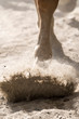 hooves of a running horse in Liguria in Italy