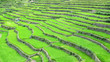 Leinwanddruck Bild - Panorama Picture of the ancient rice terraces in Banaue Ifugao Province, Philippines - UNESCO World Heritage Site