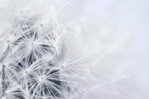 Fotografie, Obraz  Close up of Dandelion seeds for background