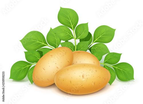 Fotografia Three potatoes with leaves