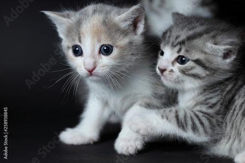 Fotografie, Obraz  junge Katzen spielen