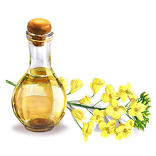 Bottle Of Fresh Organic Rape Seed Oil And Oilseed Rape Flowers, Flowering Rapeseed Canola Or Colza, Isolated, Hand Drawn Watercolor Illustration On White Background