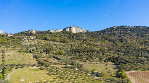 Fotografiet  french landscape, olive fied culture- aerial view-drone