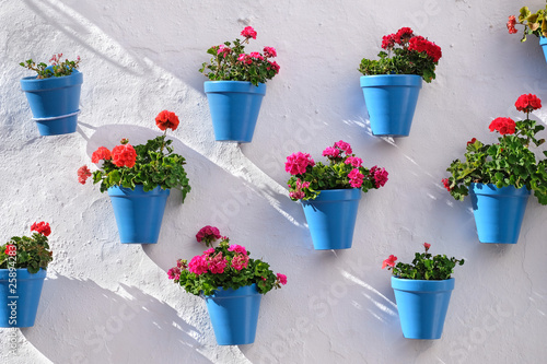 Photo Flower pots decorating on white wall in the old town of Marbella